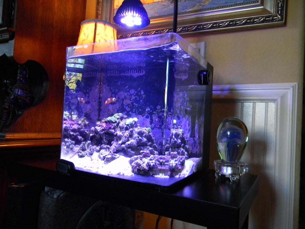 3 Gallon Contour Pico Members Aquariums Nano Reef Com