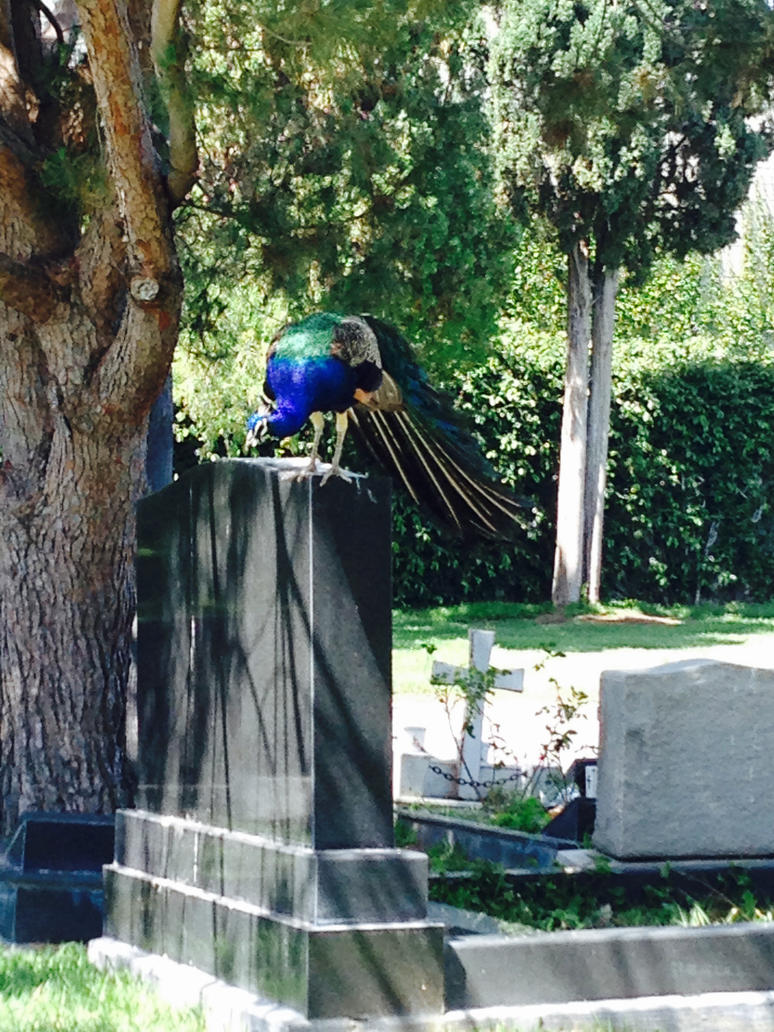 Hollywood Cemetery 4 by That-Love-Voodoo