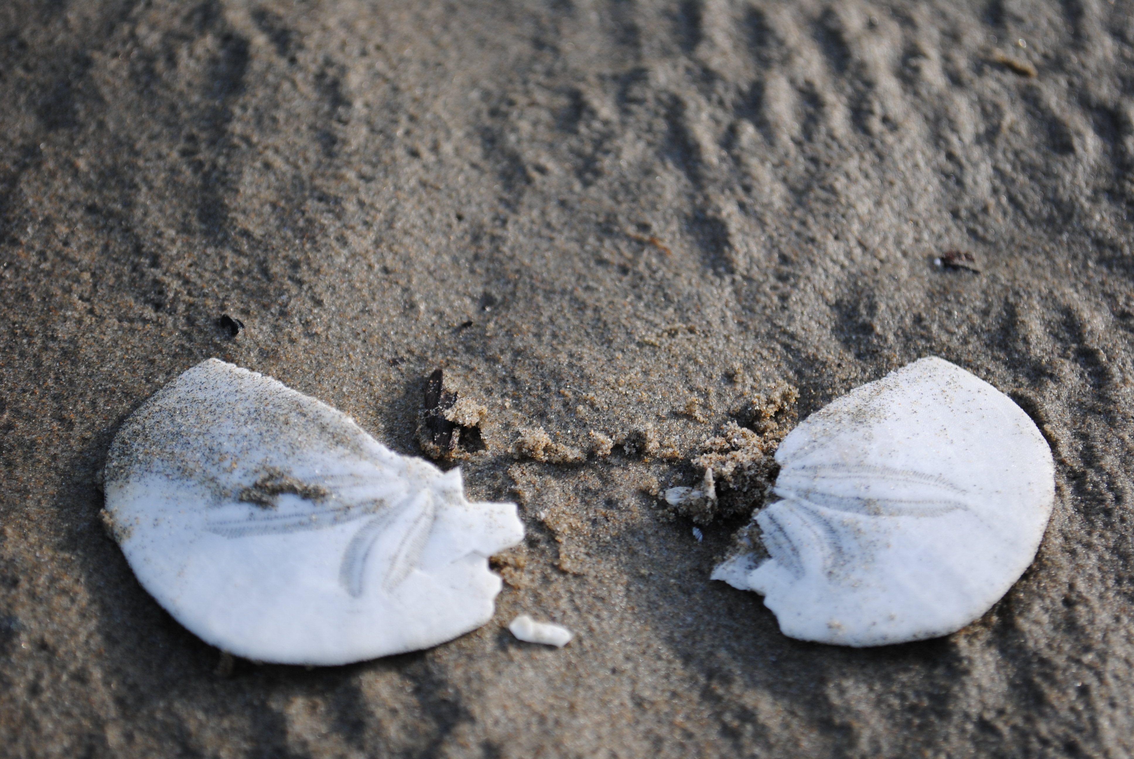Broken Sand Dollar by OhThereYouArePerry