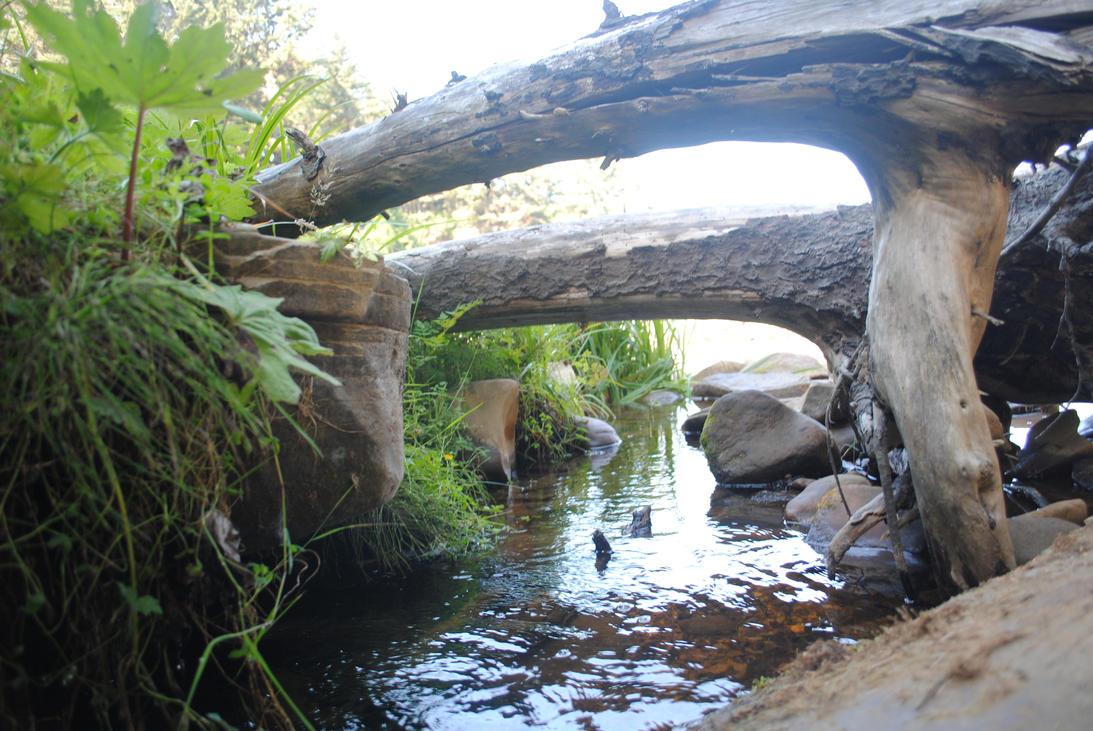 Driftwood Bridge by OhThereYouArePerry