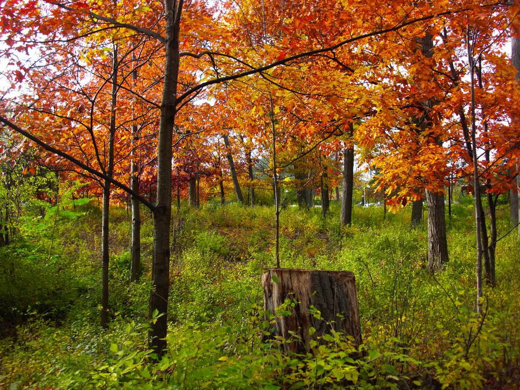 Autumn by brianfallen97