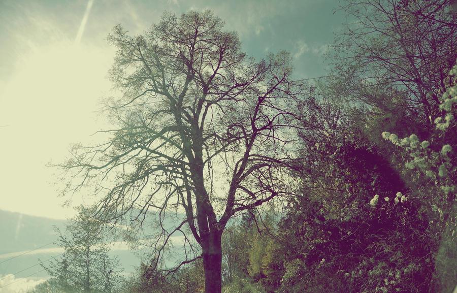 Ashenvale by Sthenno3