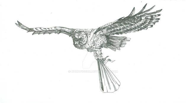 An owl has come