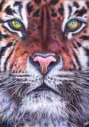 Tiger - Ballpoint pen by margaritafelis