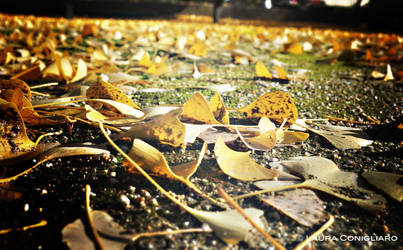 Leaves beneath your feet