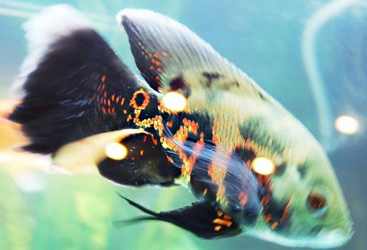 Allaaaah Fish 1