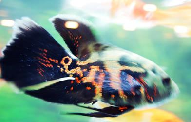 Allaaaah Fish 3
