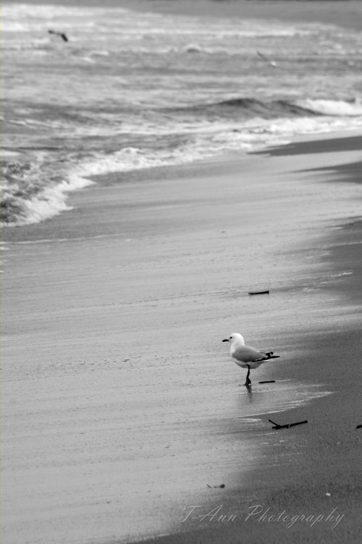Seagull by T-Ann-Photography