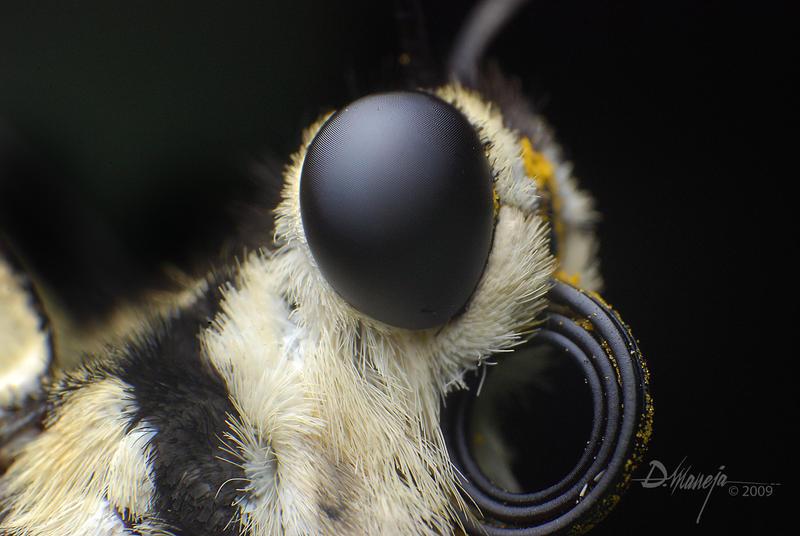 Butterfly Head 1 by dhead on DeviantArt