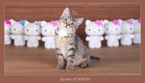 Queen of kitties