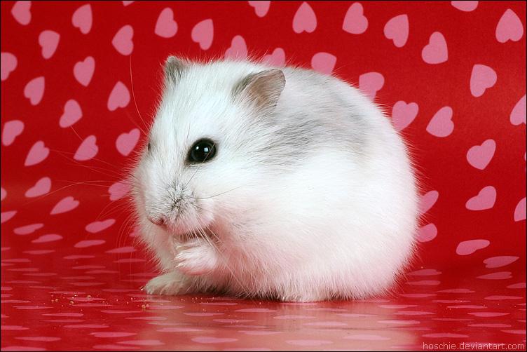 prepares for Valentine by hoschie