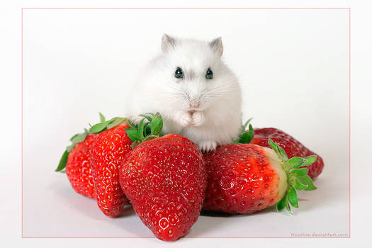 Herr Hildezart on strawberry