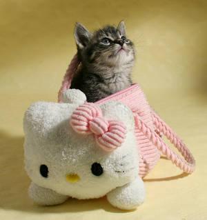 Kitty, kitty..