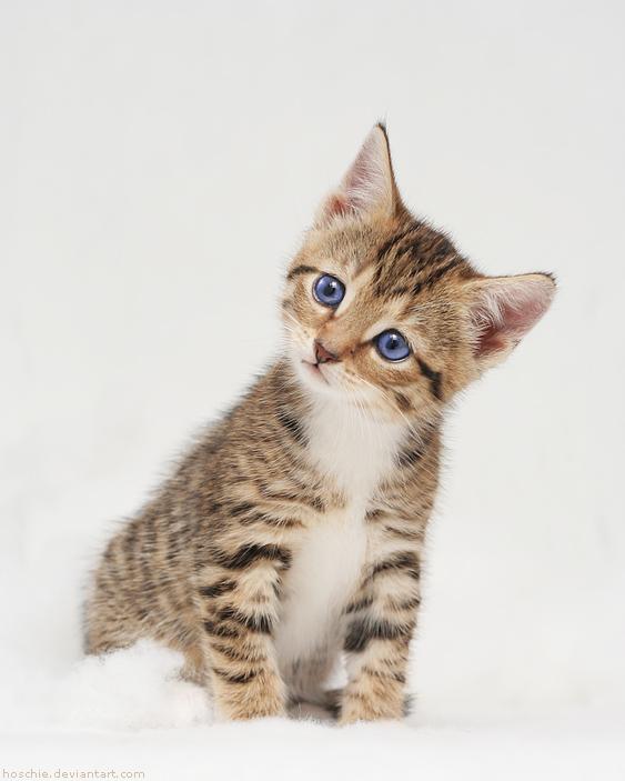 cat head tremor