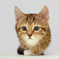Kitty-mart 07 by hoschie