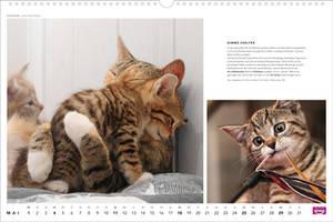Kitty-mart 08
