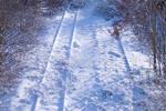 20cm snow