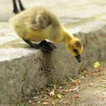 be gutsy gosling