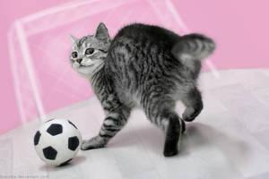 Soccer kitty