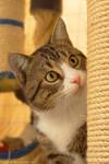 Dennis the cat