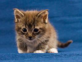Blue cuteness by hoschie