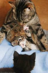 Family idyll.. by hoschie