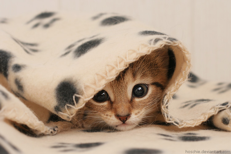Wrapped in cuteness