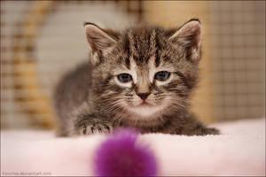 Hypno-kitten by hoschie