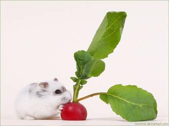 Herr Hildezart and the radish by hoschie