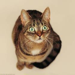 Hypno cat by hoschie