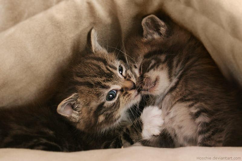 Maji svatki za gnjaviti...[Ne zamerite mi...] Sibling_love_by_hoschie-d4t99qx