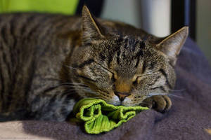 Sleeping on my shirt by hoschie