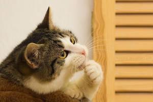Thinking cat by hoschie