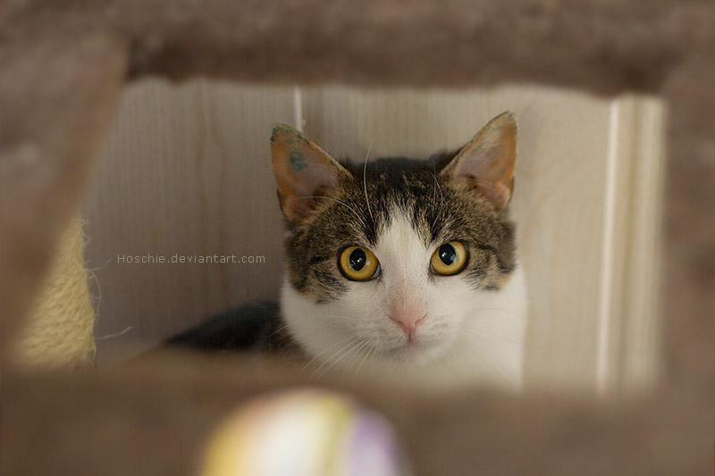 Shy Kitty by hoschie