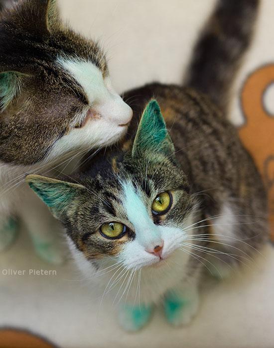 Alien kitty by hoschie