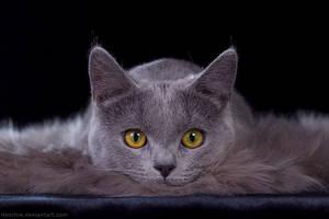 Fluffy watcher by hoschie