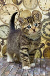 Kitten time