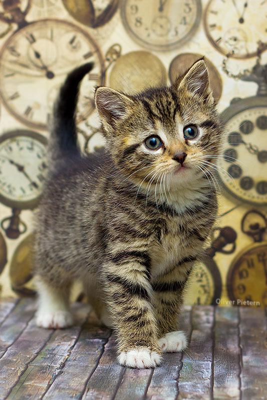 Kitten time by hoschie