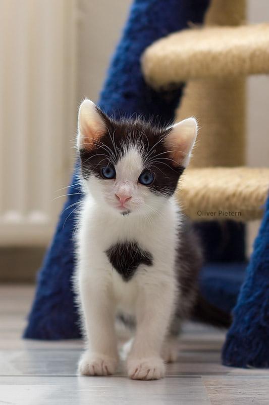 Just a cute little kitten by hoschie
