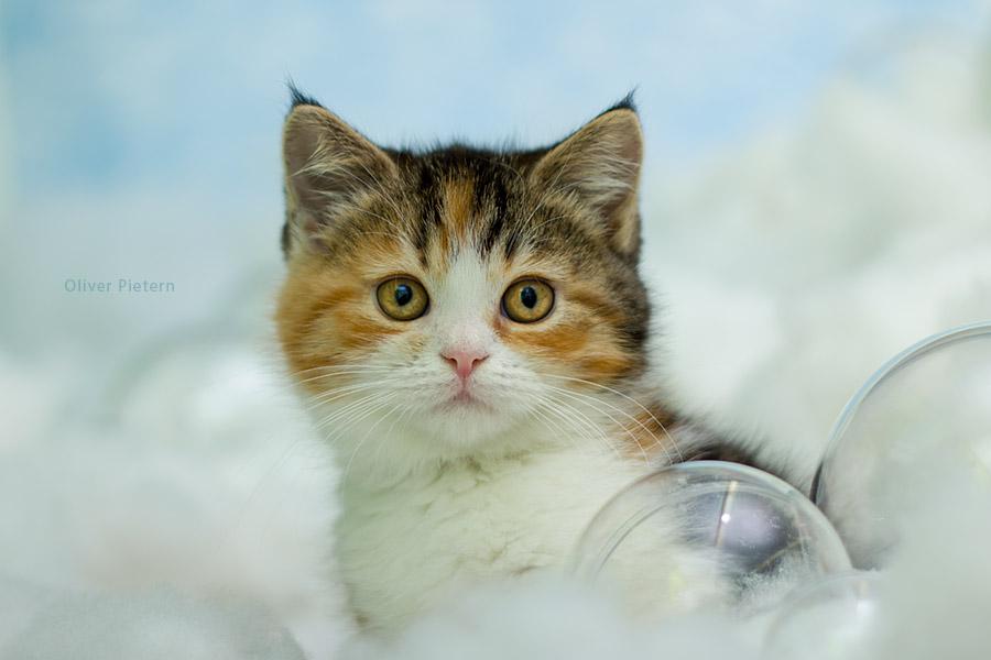 Cloud Kitten by hoschie