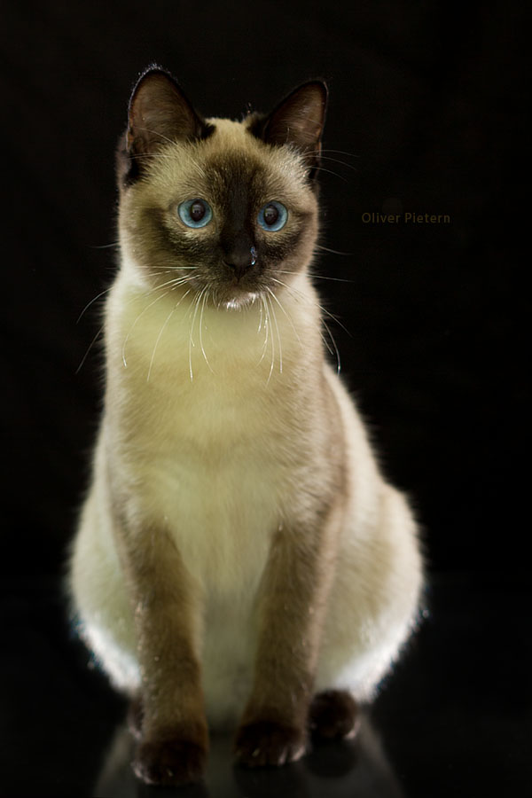 Chip by hoschie