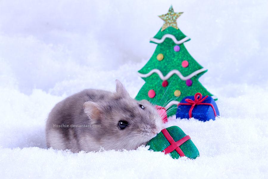 Weihnachtszart by hoschie