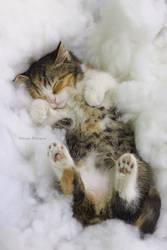 Heavenly dreams by hoschie