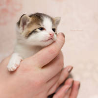 Kitten Queen by hoschie