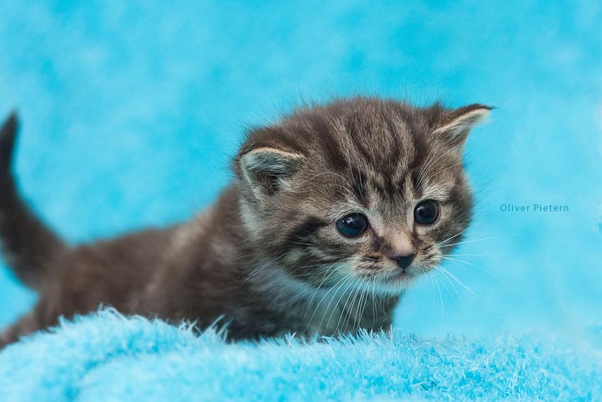 Kitty in fluffyland II by hoschie