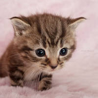 Kitty in fluffyland III