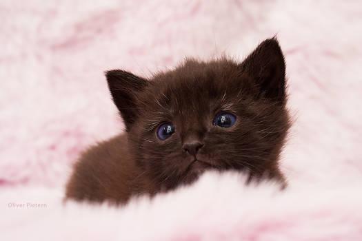 Kitty in fluffyland V