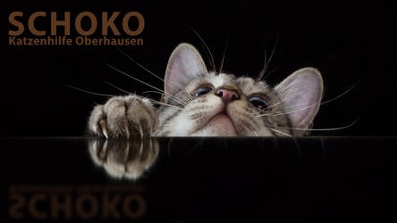 One more catmilk HD by hoschie