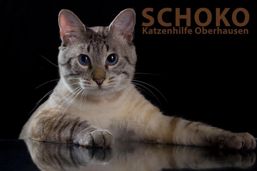 Schoko Application Photo HD 1920 1280 by hoschie