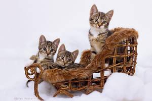 fluffy sledge by hoschie